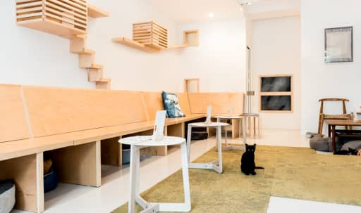 "Bright, Sunny ""Cat"" Cafe & Lounge in Civic Center, San Francisco, CA 