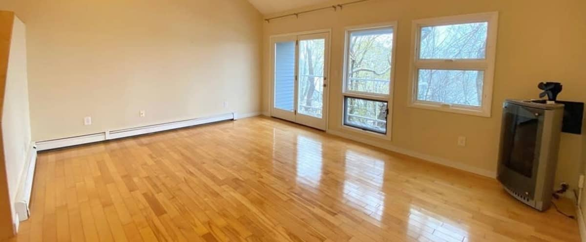 Creative Chameleon - Renting Empty! in Watertown Hero Image in undefined, Watertown, MA