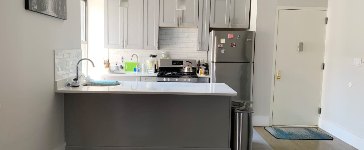 Modern Clean Space with a Stunning Kitchen in Brooklyn Hero Image in Crown Heights, Brooklyn, NY