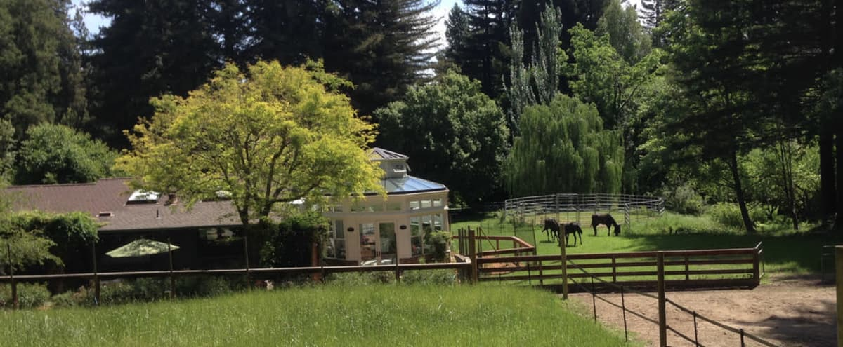 Country Home with Horses Nestled in 4 Acres of Redwoods in Felton - Santa Cruz Mountains Hero Image in undefined, Felton - Santa Cruz Mountains, CA