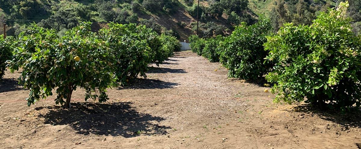 DREAMY OUTDOOR VENUE/SPACE IN LOS ANGELES + Orchard + Meadow + Mountains + Farm + Secret Garden + Fruit Trees in Sun valley Hero Image in Sun Valley, Sun valley, CA