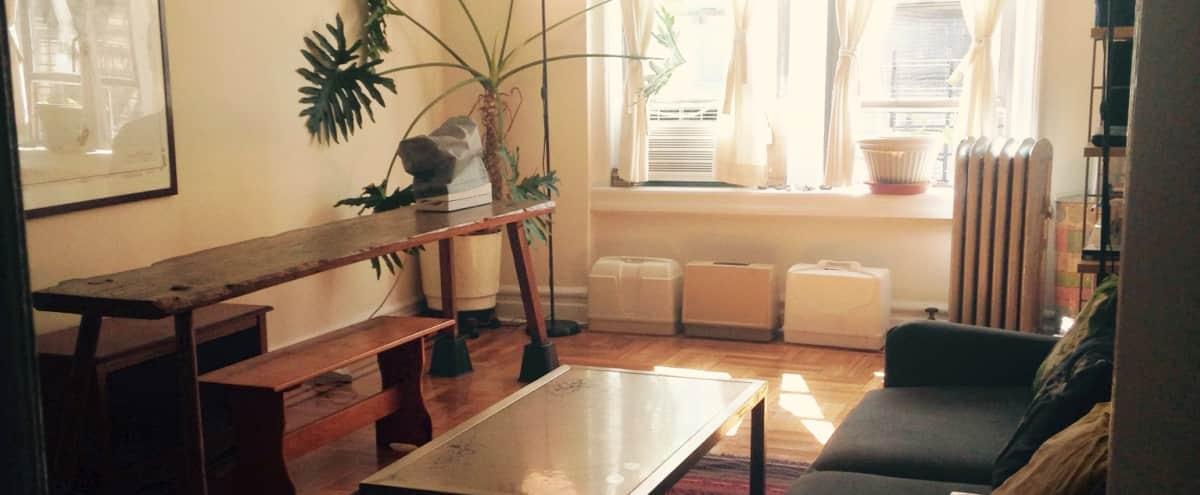 Spacious Brooklyn Bohemian One Bedroom in Brooklyn Hero Image in Flatbush - Ditmas Park, Brooklyn, NY