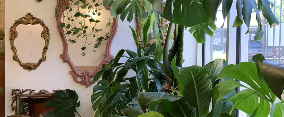 BIOPHILIA: Urban Jungle Space in Phoenix Hero Image in Encanto Village, Phoenix, AZ