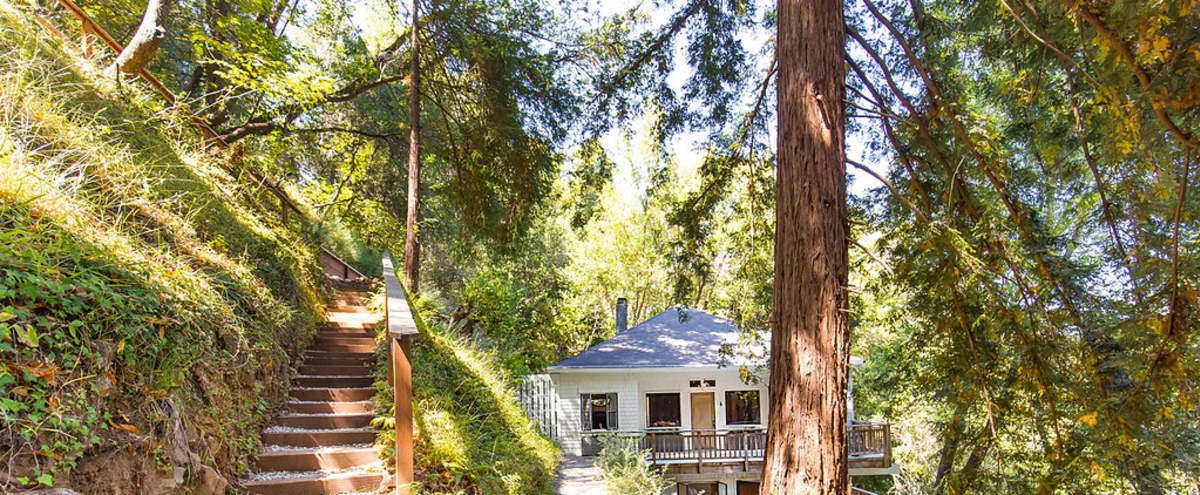 Mill Valley gem nestled in the redwoods in Mill Valley Hero Image in undefined, Mill Valley, CA