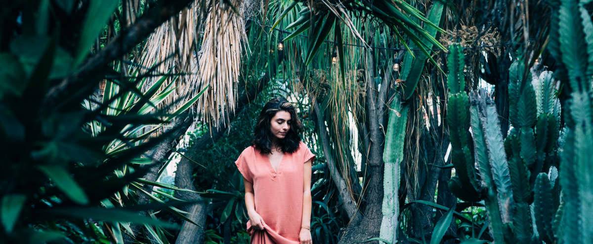 Magical Hidden Cactus Sanctuary in Los Angeles Hero Image in Central LA, Los Angeles, CA
