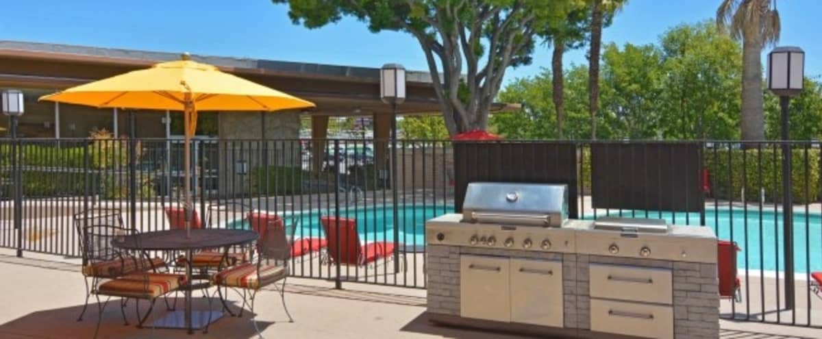 Outdoor Pool w/ BBQ Lounge Area in San Mateo in San Mateo Hero Image in Sugarloaf, San Mateo, CA
