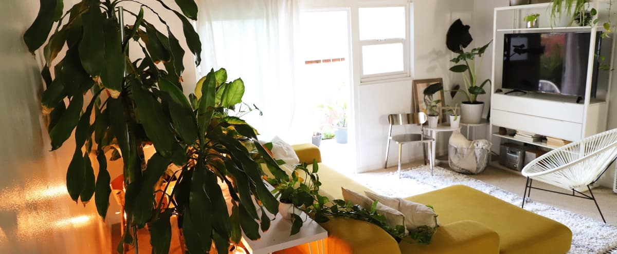 Modern Plant-filled Apartment in Oakland in Oakland Hero Image in Clinton, Oakland, CA
