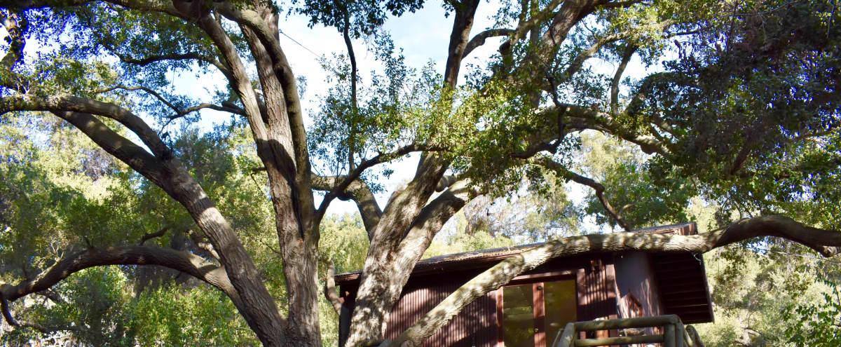 Treehouse Studio in Topanga Hero Image in undefined, Topanga, CA