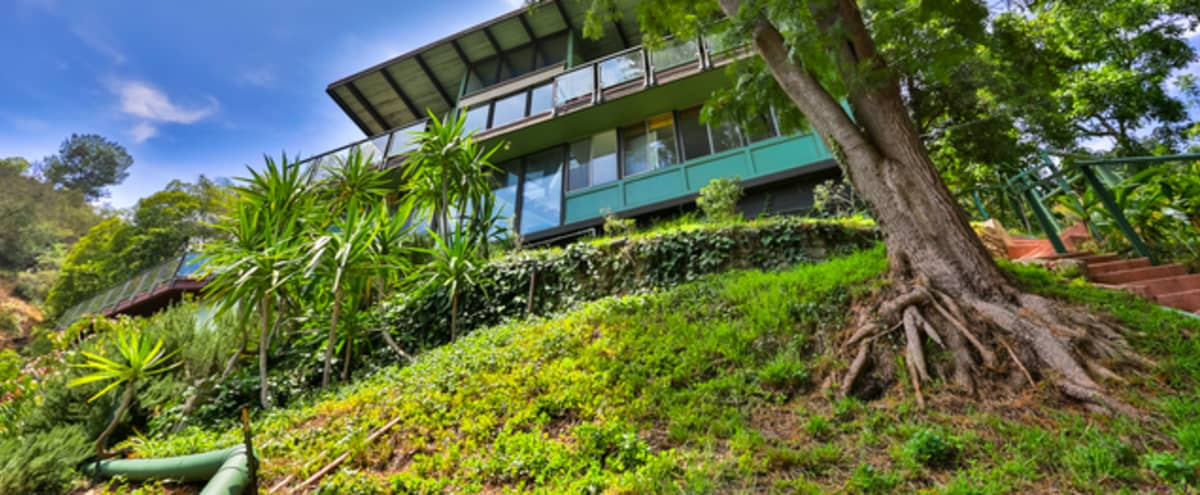 Midcentury Modern Treehouse with soaring windows and hillside/canyon views in Los Angeles Hero Image in Bel Air, Los Angeles, CA