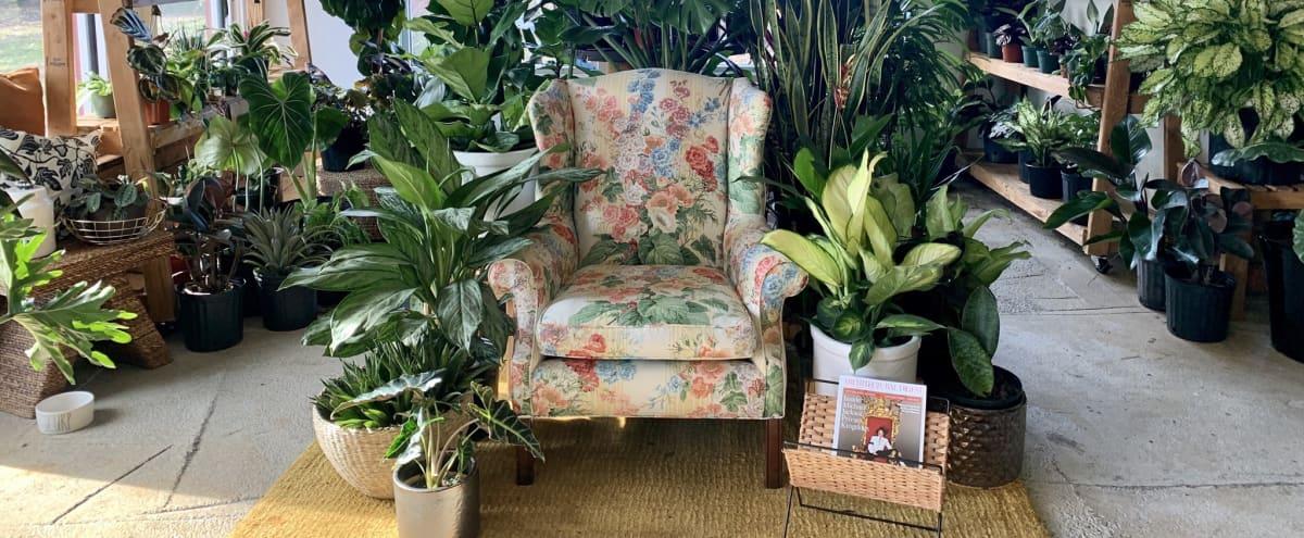 Tropical Plant Oasis in Atlanta Hero Image in Blandtown, Atlanta, GA
