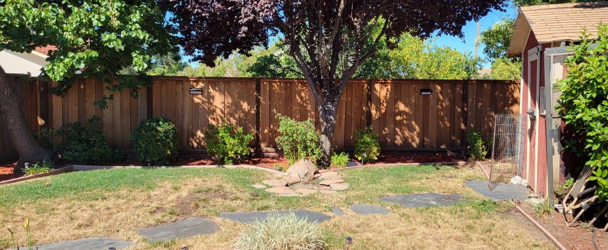 Majestic Suburban Backyard in Concord Hero Image in undefined, Concord, CA