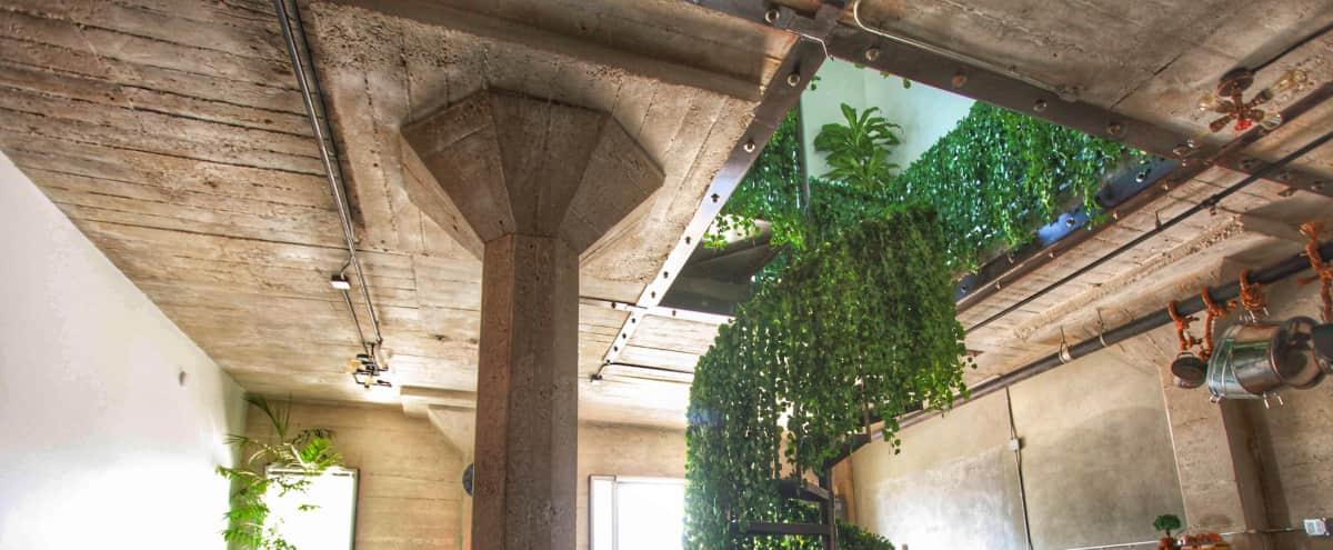 Secret Garden LOFT - Huge Balcony + Massive roof top in Hollyowod Hero Image in Central LA, Hollyowod, CA