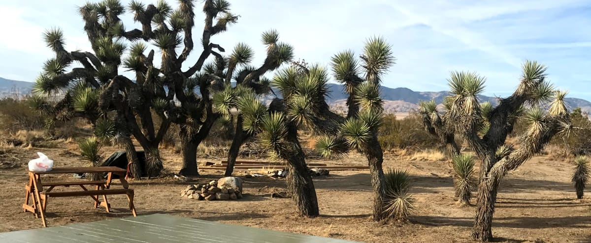Remote Desert Camp with Joshua Trees and Mountain Views in Rosamond Hero Image in undefined, Rosamond, CA