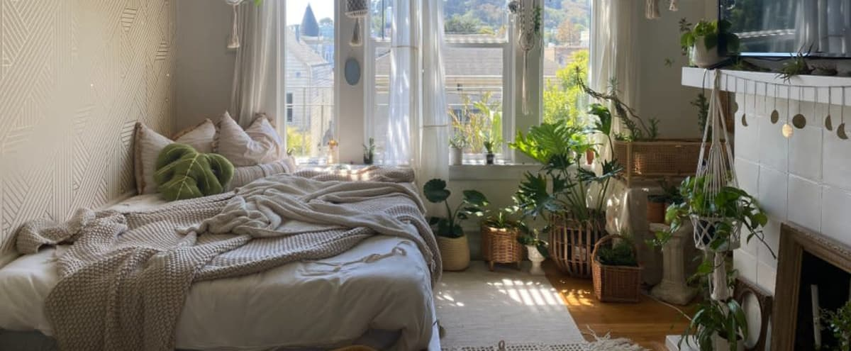 Dreamy, Bohemian Studio Apartment Full Of Plants in San Francisco Hero Image in North of the Panhandle, San Francisco, CA