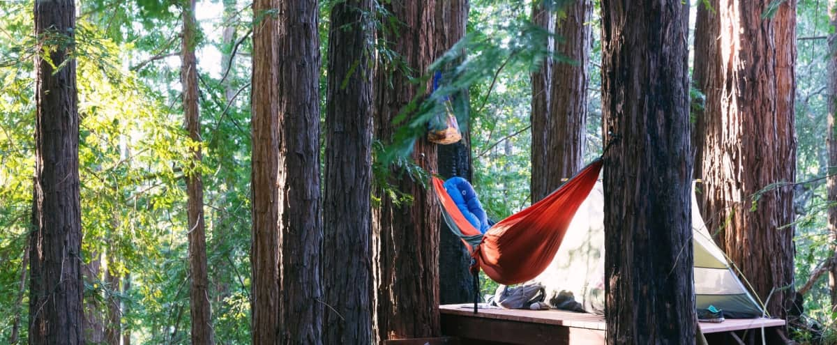 Elevated Spaces in the Redwoods in Boulder Creek Hero Image in undefined, Boulder Creek, CA