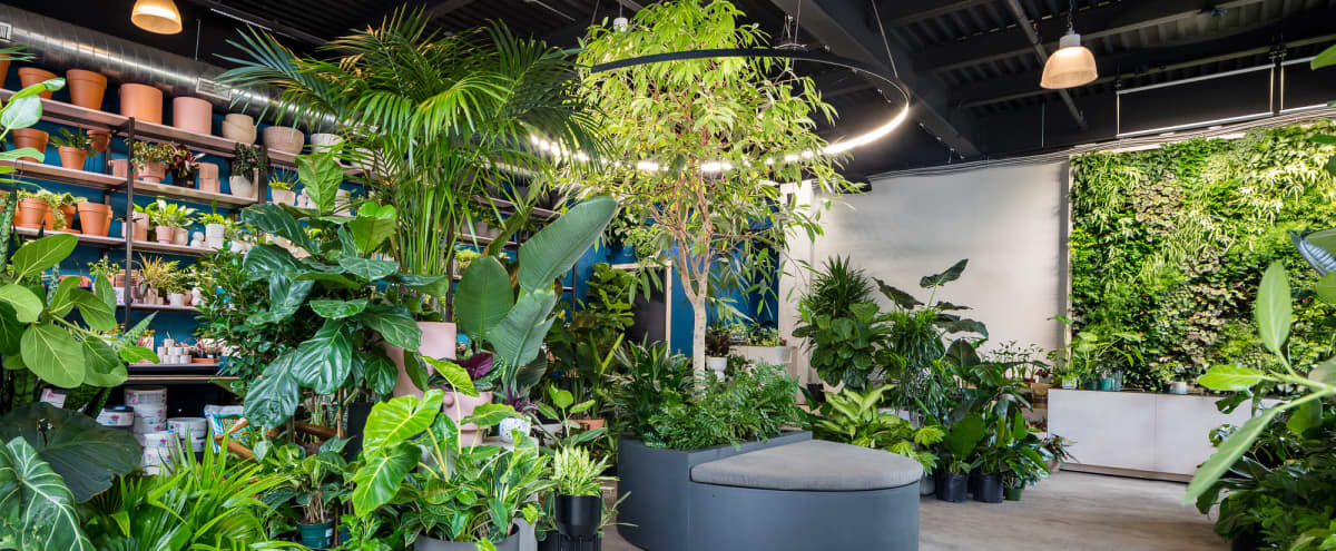 Botanic Design Retail Store and Showroom in Brooklyn Hero Image in Greenpoint, Brooklyn, NY
