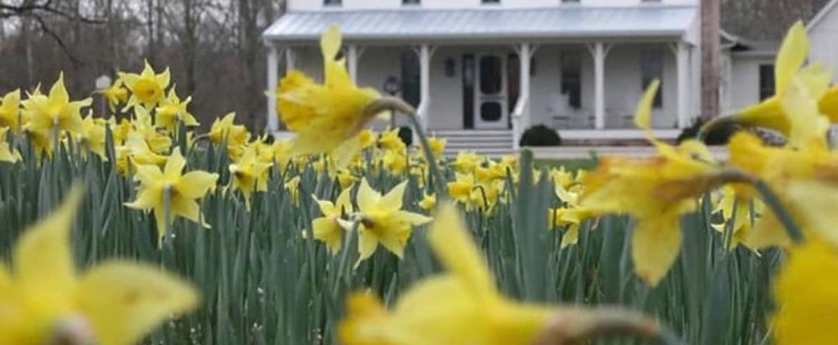 Daffodil Hill in Thompsons Station Hero Image in undefined, Thompsons Station, TN