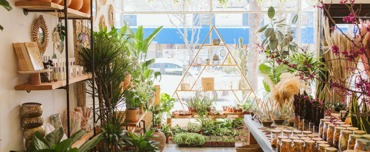 Studio City Plant and Flower Shop with Lush Interior in Studio City Hero Image in Studio City, Studio City, CA