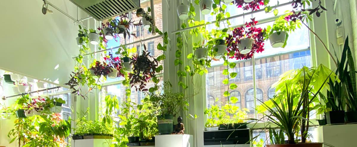 Botanical Loft in New York Hero Image in Lower Manhattan, New York, NY