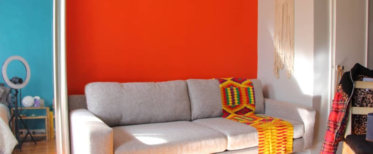 Cozy Studio Apartment with Large Windows and Colorful Touches in Brooklyn Hero Image in Crown Heights, Brooklyn, NY