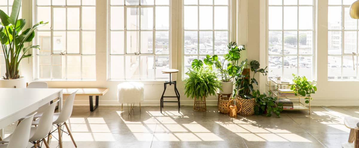 Gorgeous, Sun-drenched Downtown LA Photo Studio Loft with Amazing Natural Light, Big Windows, Air Conditioning, Disco Ball, Projector, Plants and Blackout Shades. in Los Angeles Hero Image in Downtown Los Angeles, Los Angeles, CA