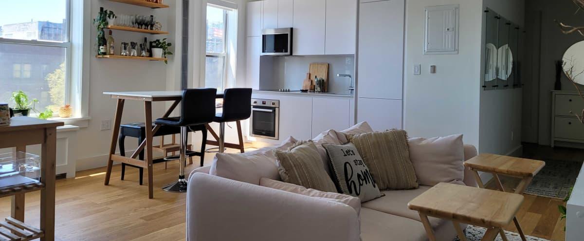 Urban Three Bedroom Modern Apartment in Brooklyn Hero Image in Little Caribbean, Brooklyn, FL