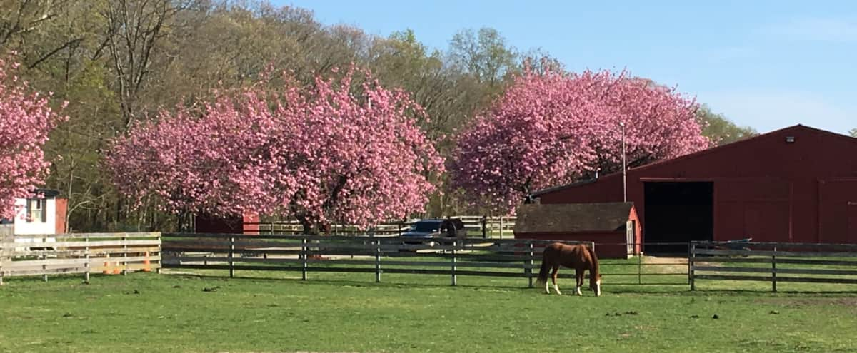 A complete equestrian facility in Manorville Hero Image in undefined, Manorville, NY