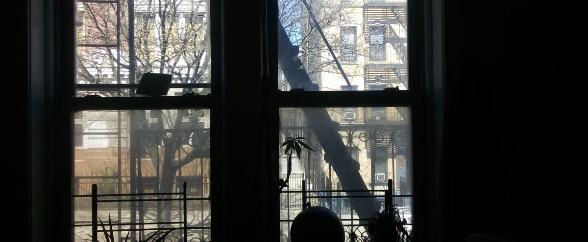 Decadent Good Vibe Apartment in an early'900 Brooklyn Building in Brooklyn Hero Image in Crown Heights, Brooklyn, NY