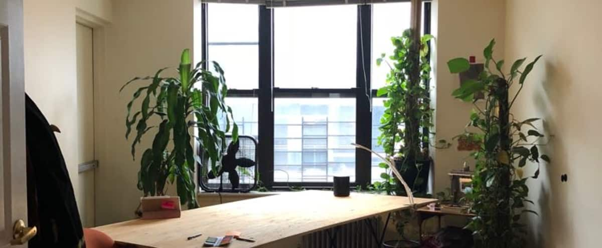 plant filled bright spacious apartment, open kitchen/ living room/ room - view in New York City Hero Image in Harlem, New York City, NY