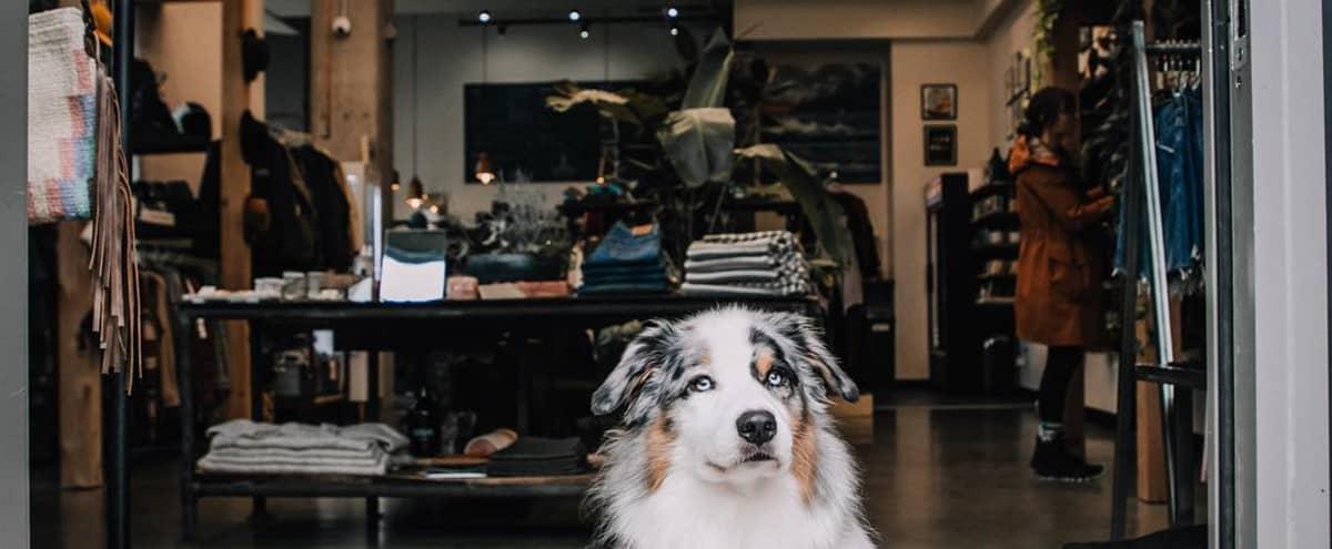 NE PDX Surf Shop and Café in Portland Hero Image in Kerns, Portland, OR