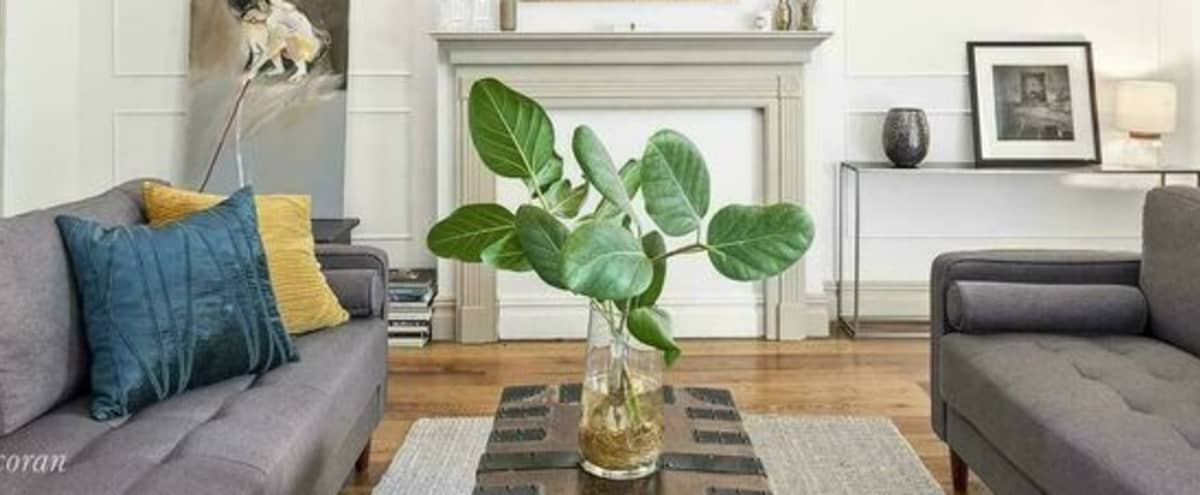 Pristine & Serene Townhouse in Brooklyn in Fort Greene Hero Image in Fort Greene, Fort Greene, NY