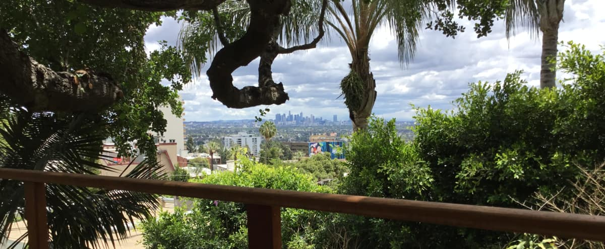 Midcentury Treehouse in Los Angeles Hero Image in Central LA, Los Angeles, CA