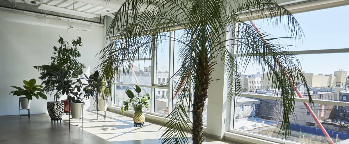 Matka: Okno: Huge Photo/Video Studio Space w/Free Lighting+Tropical Plants in Brooklyn Hero Image in East Williamsburg, Brooklyn, NY