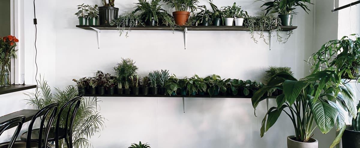 60's Plant Shop in Seattle Hero Image in Belltown, Seattle, WA