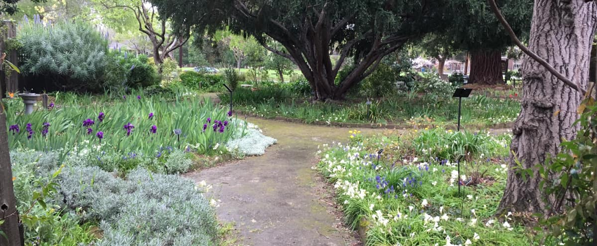 Charming historic garden in downtown Palo Alto in Palo Alto Hero Image in University South, Palo Alto, CA
