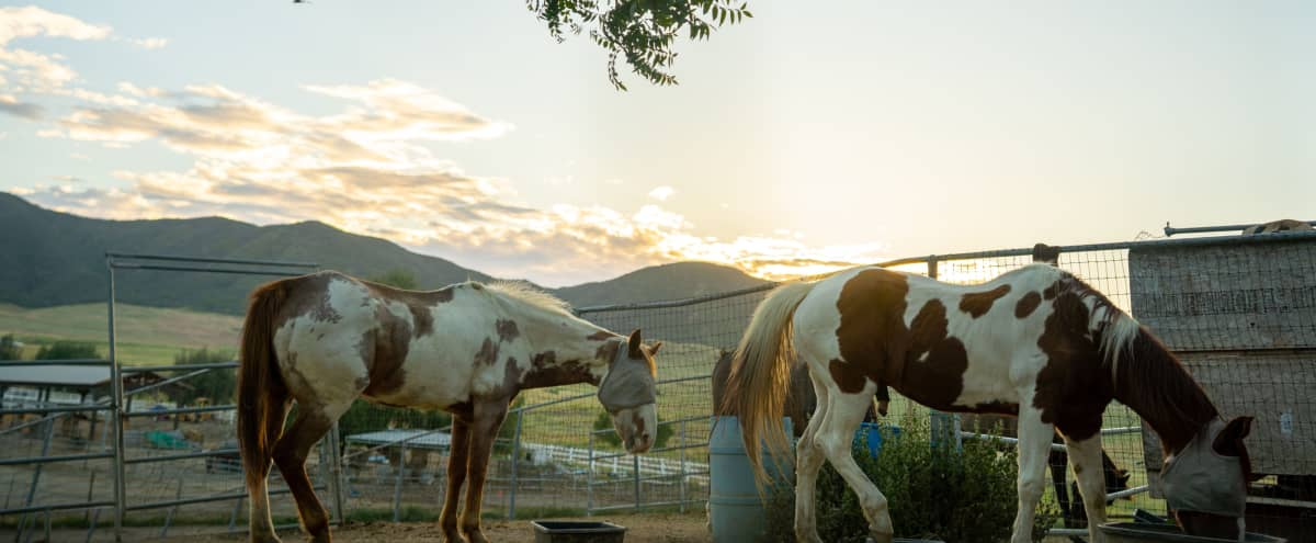 Historic Downtown Ranch with Stunning Views in Murrieta Hero Image in undefined, Murrieta, CA
