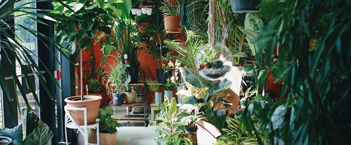 REWILD Plant and Floral Studio in Washington Hero Image in Shaw, Washington, DC