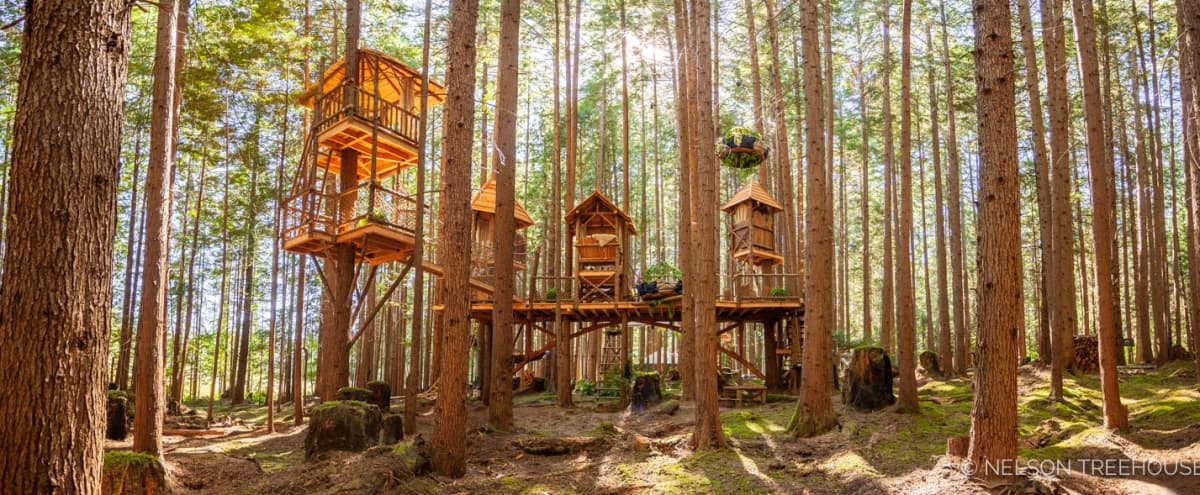 Stunning Redmond Forest with Climb-In Theater, Yurt, & Stage | Ideal for Intimate Events in Redmond Hero Image in undefined, Redmond, WA